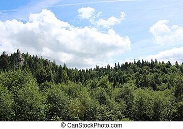 landscape with forest in Carpathian mountains
