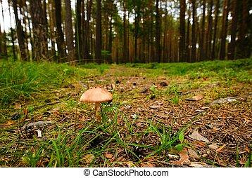 Nice light brown mushroom on the forest paht