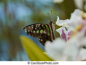 Nice multicolored butterfly perched on a flower
