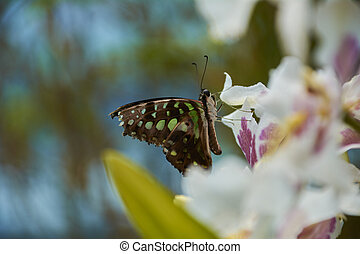Nice multicolored butterfly perched on a flower.