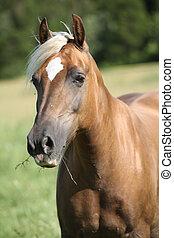 Nice palomino on pasturage - Nice horse with blond hair ...