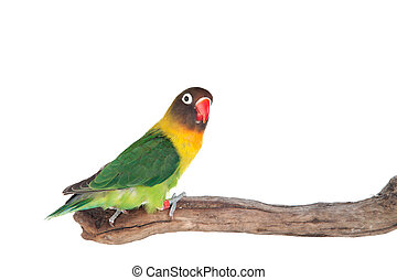 Nice parrot with red beak and yellow and green plumage on ...