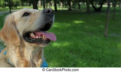 Nice purebred dog resting in the park