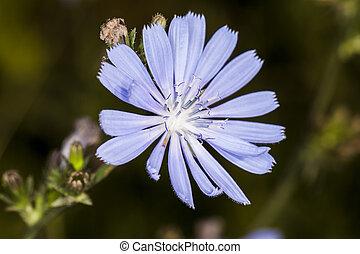 nice purple flower