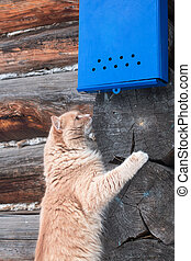 Nice red cat waiting for the letter under the bright blue mailbox on the background of wooden wall.