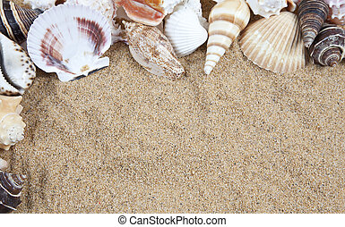 Nice sea shells on the sandy beach taken closeup, Shell border o
