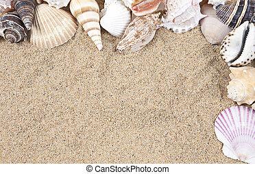 Nice sea shells on the sandy beach taken closeup, Shell border or frame