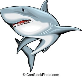 shark isolated on the white background
