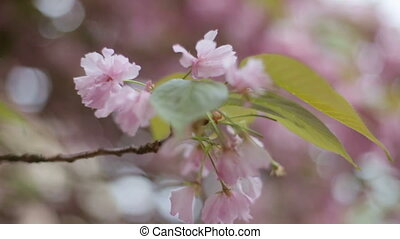 Nice spring background of branches of a blossoming tree.