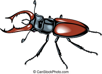 nice stag beetle isolated on white background