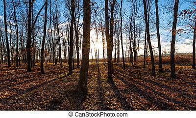 Nice sunny autumn forest in sunset light