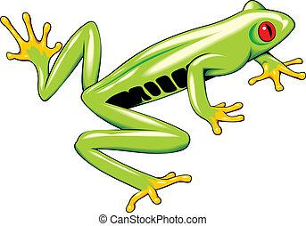 tree frog - nice tree frog isolated on white background