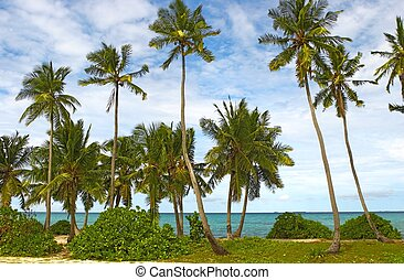 Nice view with palmtrees on the island Gan in Indian Ocean, ...