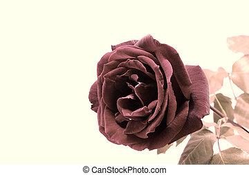 nice vintage rose photo detail