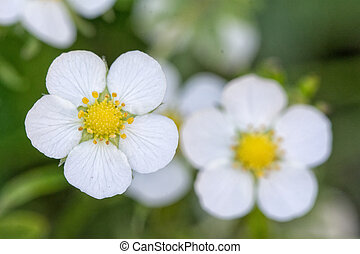 Nice white flower with blurred background