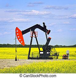 nickande, olja pumpar, in, prärieer
