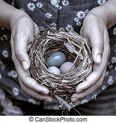 nido, mujer, hands., huevos, colorido