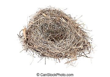 nido, reyezuelo, aislado, pájaro, vacío, carolina