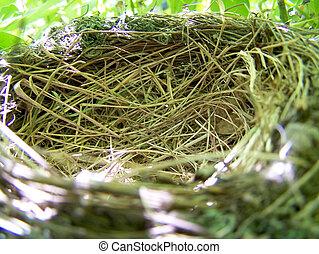 nido, su, il, albero