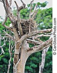 nido, su, secco, albero