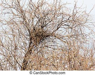nido, su, uno, albero