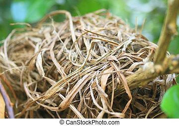nido uccello, albero