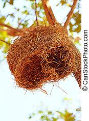 nido uccello, su, albero
