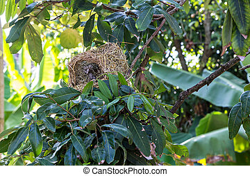 nido uccello, su, ramo albero