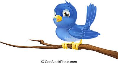 niebieski ptak, na, drzewo gałąź
