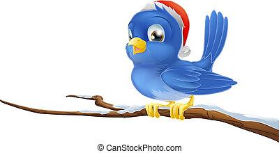 niebieski ptak, w, gwiazdkowy kapelusz