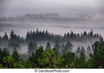 niebla, bosque de árbol, pino, sunrising