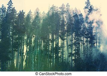 niebla, bosque