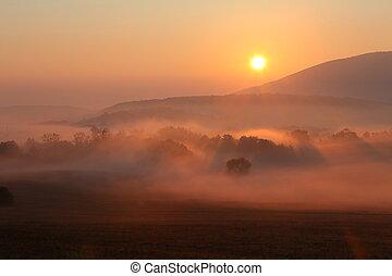 niebla, con, sol, árboles, ser, mojado, húmedo, niebla, de,...