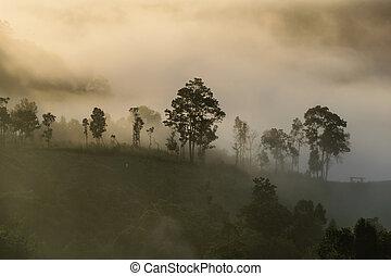 niebla, cubierta, árbol, en, el, montaña, con, luz del sol