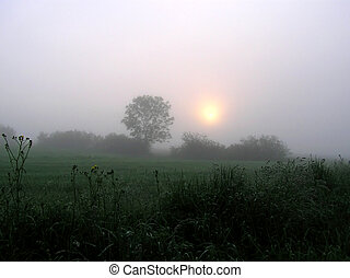 niebla, y, árbol