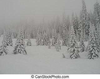 niebla, y, nieve