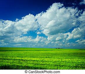 niebo, łąka, pochmurny