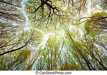 niebo, liście, -, przeciw, drzewa, las