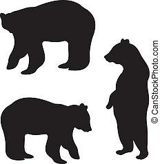 niedźwiedź, wektor
