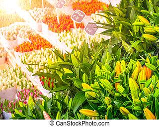 niederländisch, tulpenblüte, market., mehrfarbig, blumen, verkauf, amsterdam, netherlands.