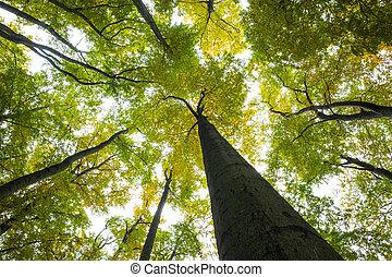 niedrige winkelsicht, von, groß, bäume