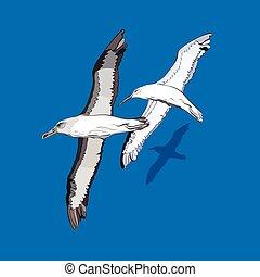 niejaki, gromada, od, przelotny, ptaszki