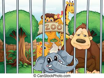 niejaki, ogród zoologiczny, i, przedimek określony przed...
