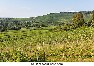Niemiec, Lato, Wino, krajobraz, pola