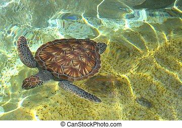 niemowlę, żółw, morze