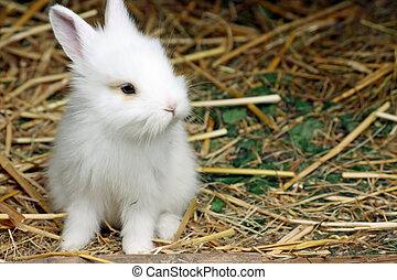 niemowlę królik