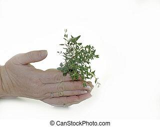 niemowlę, roślina, w, siła robocza, tło
