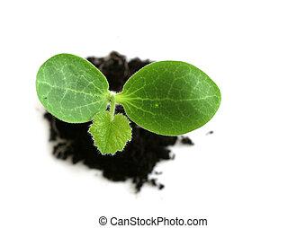 niemowlę, roślina