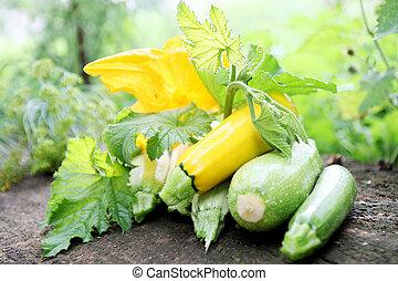 nieruchome życie, zucchini