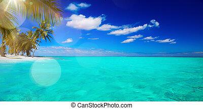 nietknięty, tropikalny, sztuka, plaża